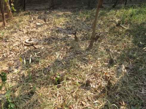 Garden with landmines at Landmine Museum, Siem Reap, Cambodia