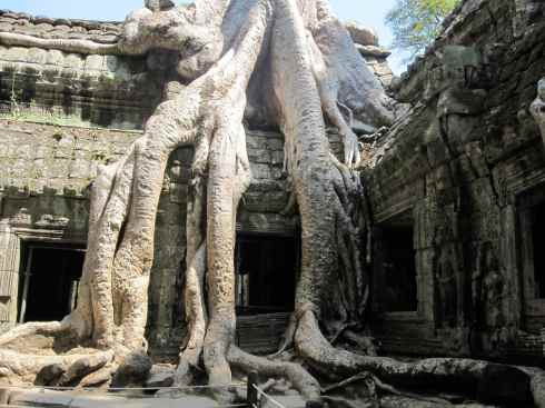 Tree roots devouring a colonnade in Ta Prohm, near Angkor Wat, Cambodia.