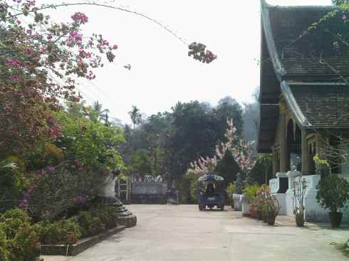 view of monastery, with flowers in foreground, Luang Prabang, Laos