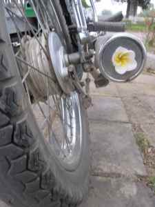 Flower in the exhaust of a motorbike at the Imperial Palace, Hue.