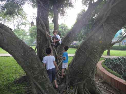 Z and two friends climb a tree in the gardens of the Temple of Literature, Hanoi, Vietnam