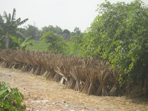 Sheaves of split bamboo on a road lined with paddy straw, rural Vietnam.
