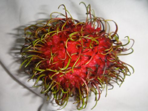 A rambutan, with green tendrils emerging from its fuchsia rind.