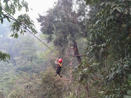 Zipwiring through the canopy of tropical forest, Laos.