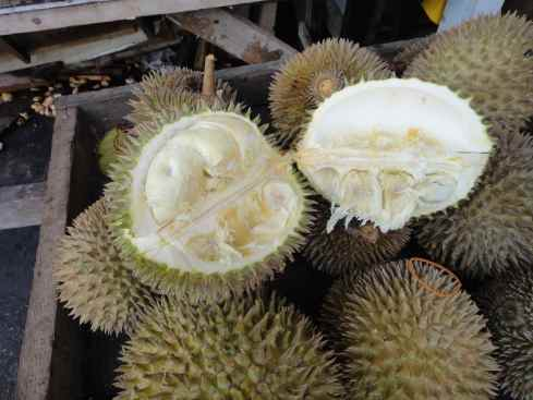 opened durian fruit revealing the flesh.