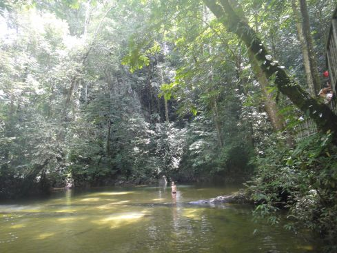 Jungle trees shade a clear river with golden sand bottom, outside Clearwater Cave, Mulu National Park, Sarawak, Borneo, Malaysia.