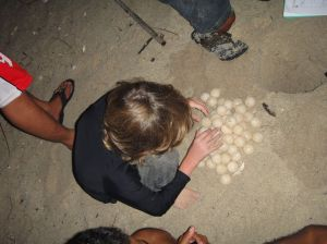 Z helps transfer the turtle eggs to their new home in the hatchery, Pulau Derawan.