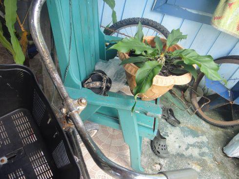 back garden of losmen danakan, pulau derawan, with bicycles and flowers.