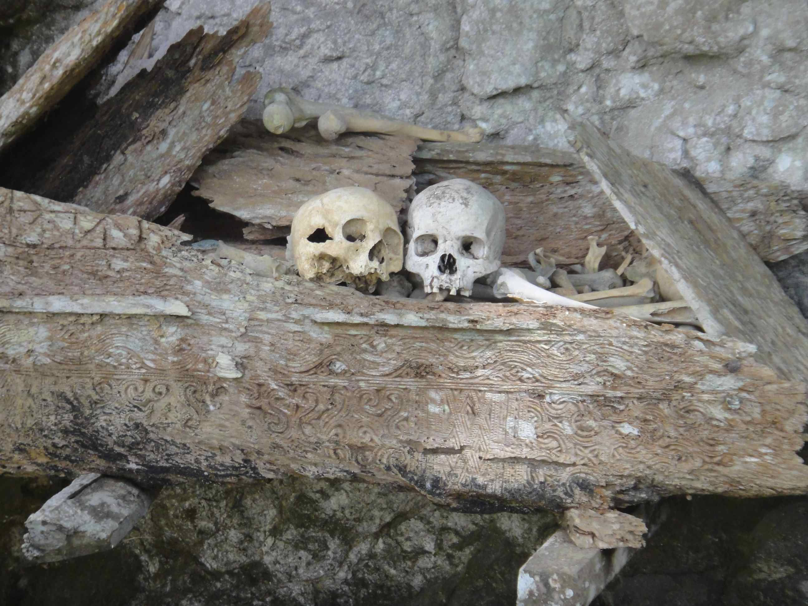 Skulls on top of the crumbling wood of a carved coffin. Hanging graves, Kete Kesu, Tana Toraja
