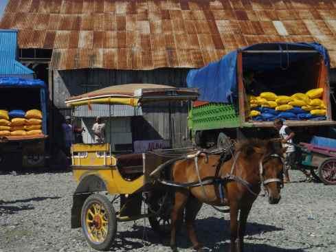 horse and cart waiting at Ampana port, Sulawesi, Indonesia.