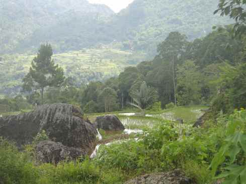 Boulders and stepped rice terraces flooded with water against mountains. Tana Toraja landscape, Sulawesi, indonesia.