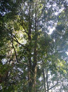 light shining through clove trees on pulau ternate, maluku, indonesia