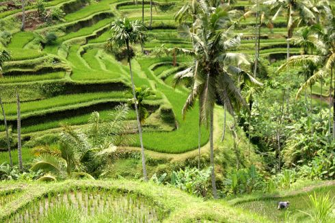Yves Picq's image of Rice terraces in Bali