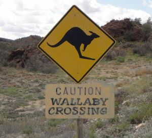 Sign with picture of bouncing marsupial and label, Caution Wallaby Crossing Australia