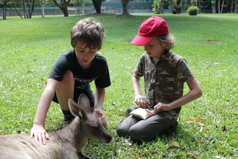 Zac and friend feeding kangaroo at Australia zoo