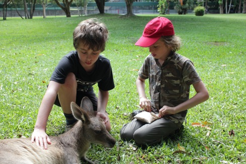Zac and friend feeding kangaroo at Australia zoo